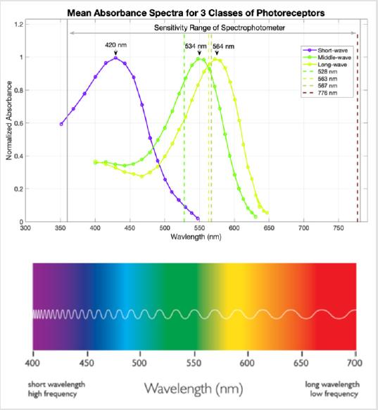 Modeling Autonomic Pupillary Responses from External Stimuli